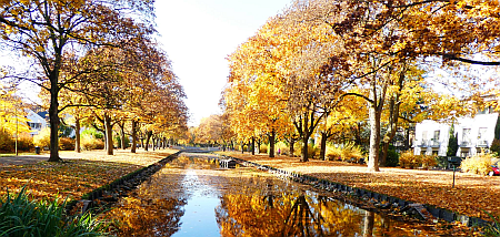 autumn trees along a canal